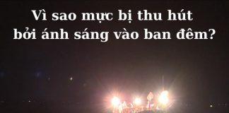 vi-sao-muc-bi-thu-hut-boi-anh-sang-vao-ban-dem